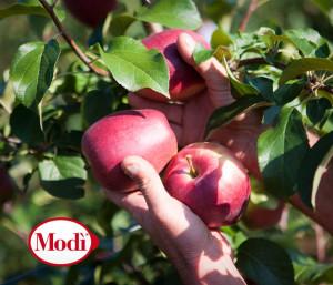 Civ detiene il brand della mela Modì