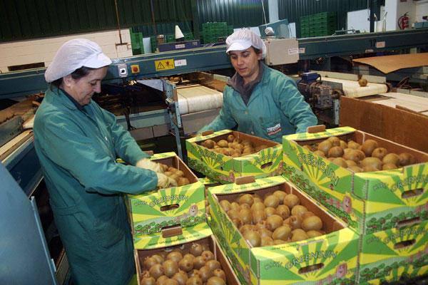 La tecnologia post raccolta SmartFresh di AgroFresh è utilizzata sul kiwi da 13 anni