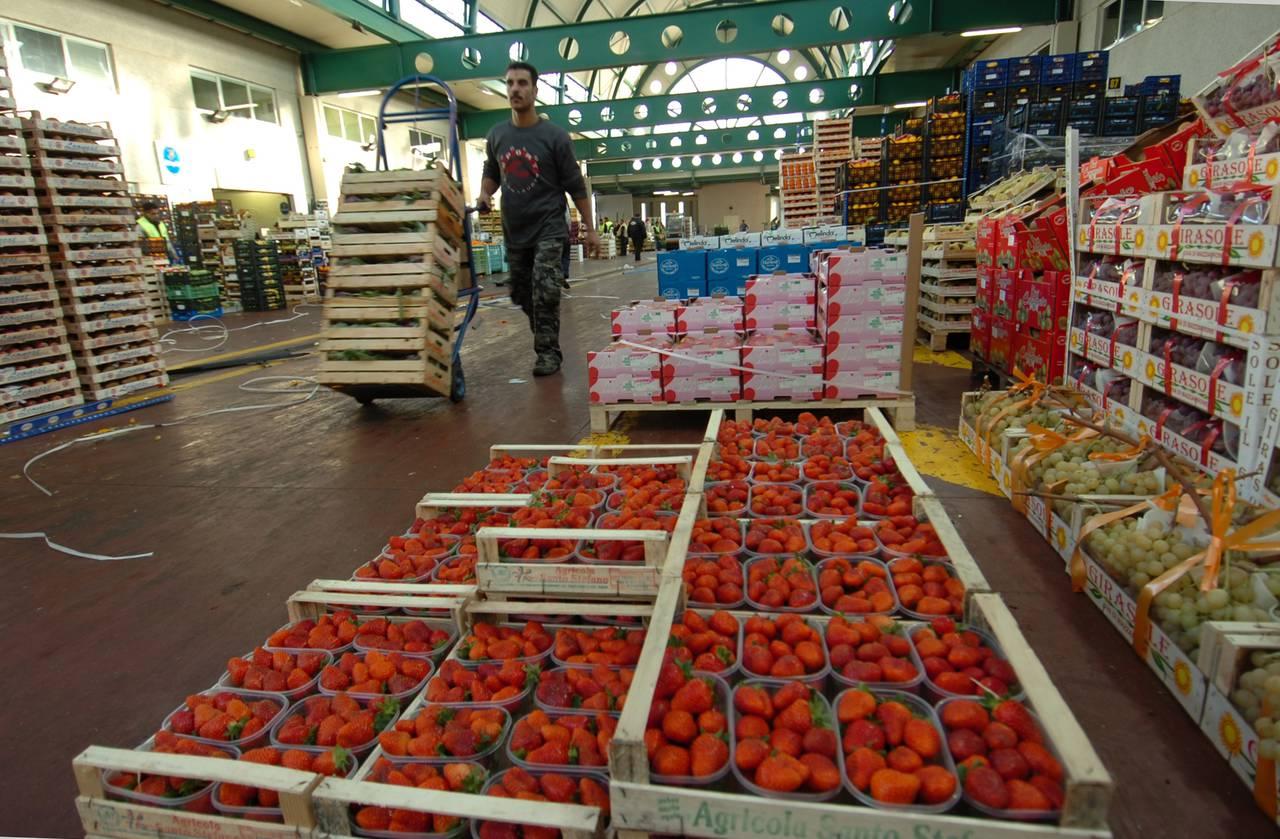 Prezzi in rialzo per le fragole che al Sud sono in piena attività di raccolta con le varietà Fortuna, Melissa e Sabrina e presto Sabrosa