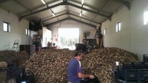 Patata di Anguillara-stoccaggio