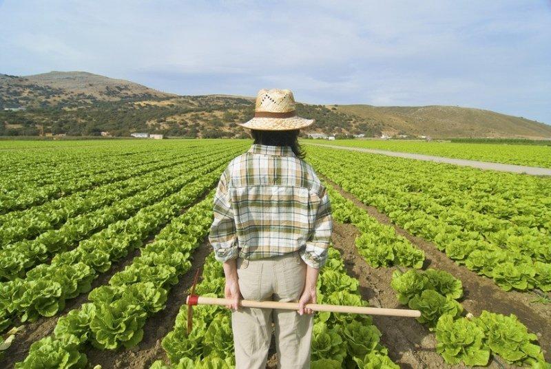 Non solo ristori per il comparto dell'agricoltura