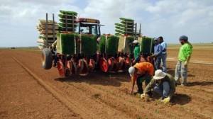 contadini israeliani