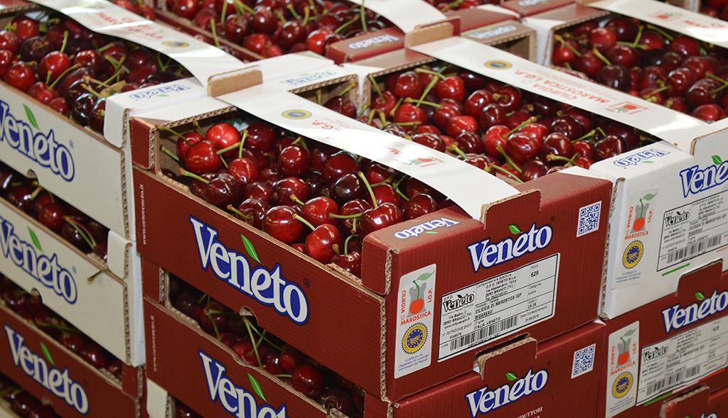 Quotazioni in aumento per le ciliegie, soprattutto quelle di di migliore qualità. Al via la produzione del Nord