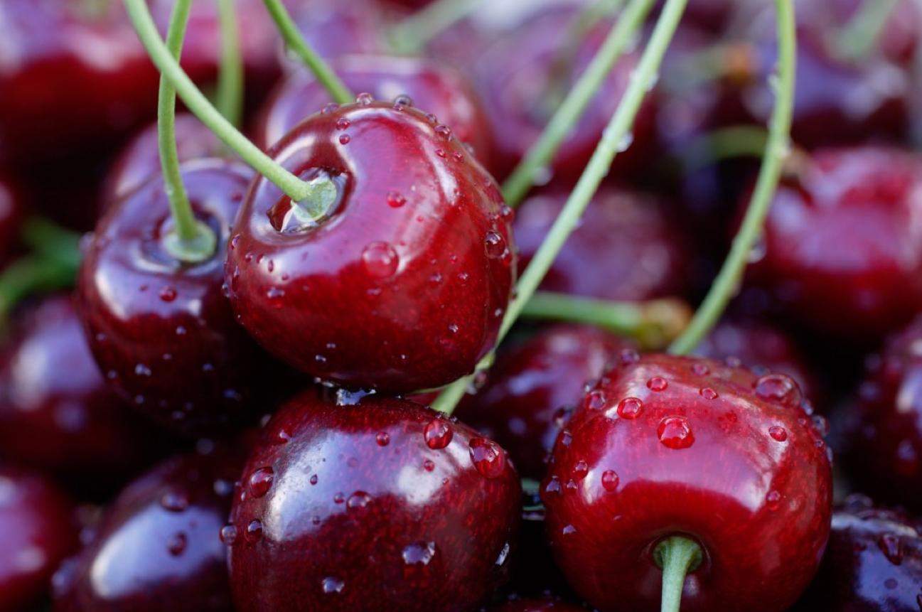 Oltre il 50% delle prime ciliegie in raccolta è andato distrutto, è l'allarme lanciato da Apo Conerpo