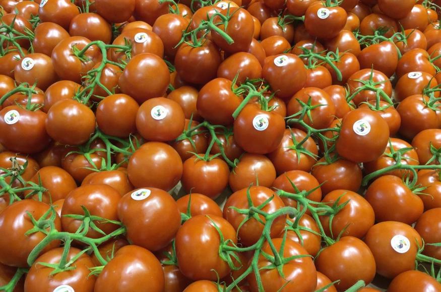 Il pomodoro pelato rappresenta il 65% di tutto il pomodoro prodotto al Sud, ricorda il presidente di Alleanza Cooperative Agroalimentari, Giorgio Mercuri
