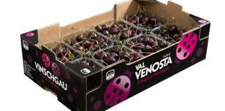 Il cartone confezione per la ciliegia della Val Venosta