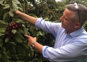 Reinhard Ladurner, responsabile vendite ciliegie VI.P.