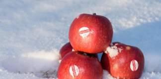 Crimson Snow, una mela Club