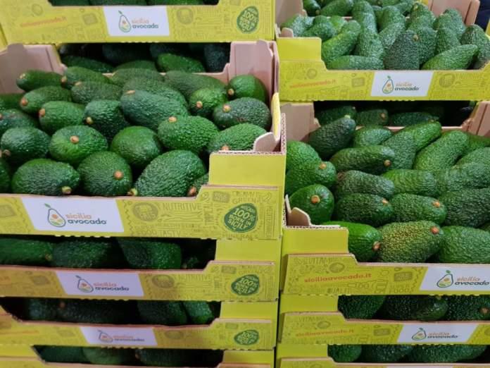 Coltivazioni di avocado sono nate nella zona alle pendici dell'Etna, in Sicilia