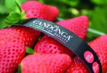 Elevata la qualità delle produzioni di fragole, come la Candonga, anche se i prezzi rimangono su livelli medio-bassi