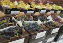 In controtendenza, salgono le quotazioni dell'uva da tavola, soprattutto la varietà Italia