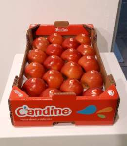 Mele Candine Apofruit, dolci e succose