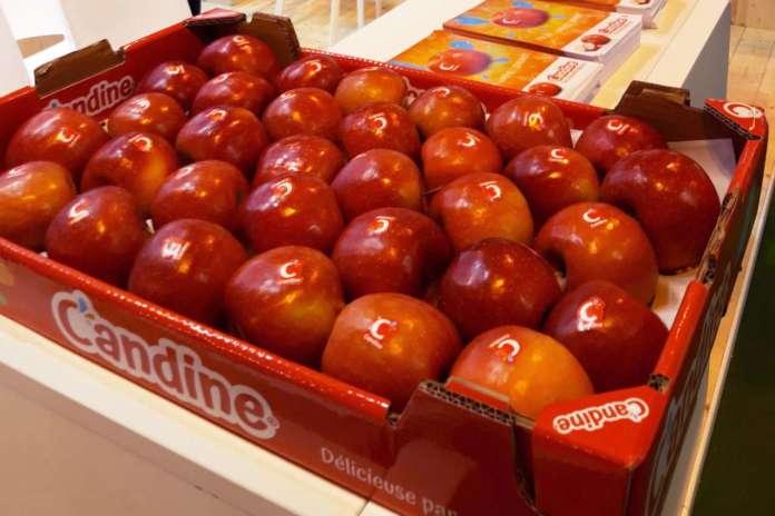 Le mele Candine di Apofruit destinate a Taiwan