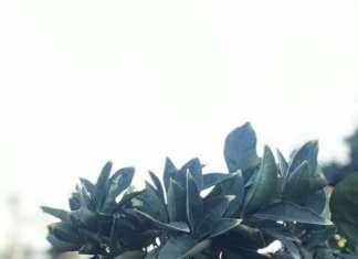 Domanda su livelli medio-bassi per le arance a causa delle alte temperature che hanno caratterizzata la settimana
