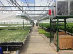 L'aeroponica funziona con un sistema di irrigazione, recupero e ricanalizzazione dell'acqua, con un risparmio che arriva al 95%