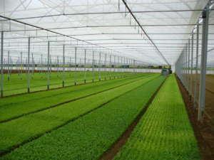 La rete Prisma: le soluzioni Arrigoni sono sia per le colture in campo sia in serra