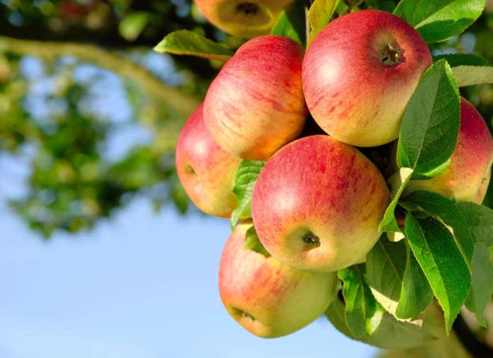 Natura Nuova chiude in modo virtuoso la filiera ortofrutticola contribuendo a ridurre lo spreco alimentare in italia