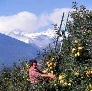 Apot investe molto nella formazione dei frutticoltori, così come nella sostenibilità