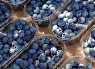 Mirtilli, uva, melanzane superfood: lo studio del Centro di ricerca alimenti e nutrizione ha dimostrato i benefici per l'intestino di frutta e verdura dal colore blu-viola