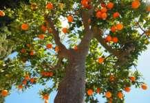Calano i prezzi delle arance a causa del rialzo delle temperature, che spingono i consumatori all'acquisto di prodotti meno stagionali