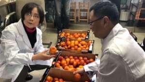 L'arancia rossa di Oranfrizer al momento dello sdoganamento