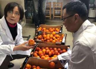 Buoni risultati per l'export di arance