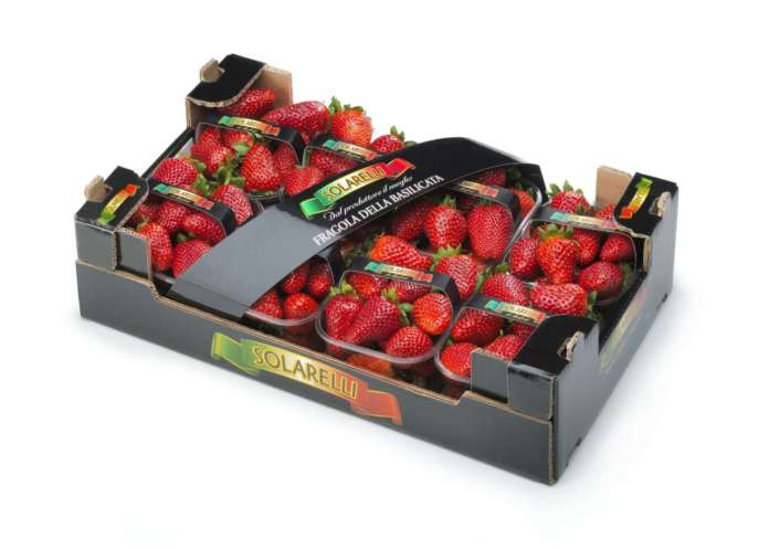 Le fragole Sabrosa, varietà top coltivata nel nostro Paese, con il packaging Attivo! del consorzio Bestack