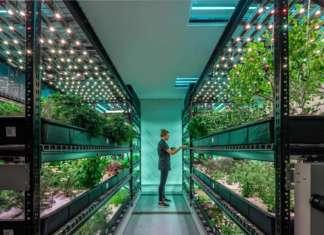 L'agricoltura diventa indoor e urbana con Farm.One e parmette maggiore valore aggiunto