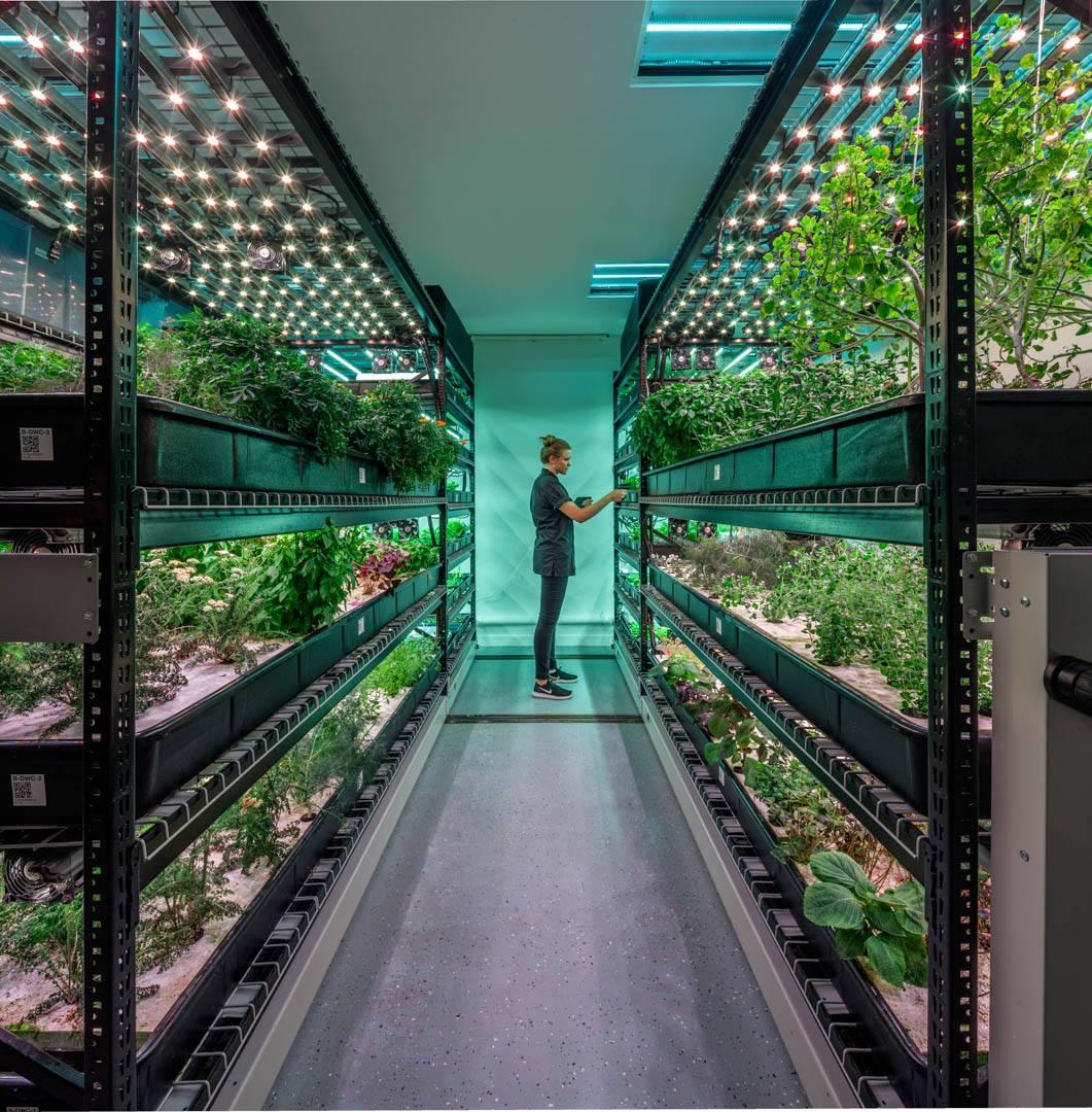 Farm One L Agricoltura A New York Si Sposta Dalla Terra