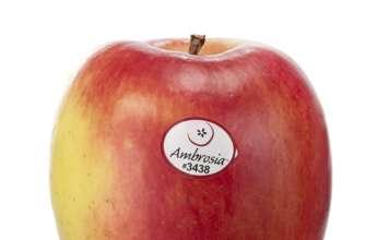 Il gusto dolce dell'Ambrosia conquista anche i mercati dell'Asia e Medio Oriente