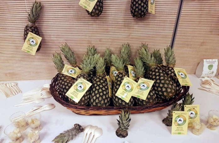 L'ananas Dolcetto biologico della varietà Pan di Zucchero a marchio Alce Nero è prodotto in Togo da una cooperativa di 1300 giovani agricoltori, di cui un terzo donne