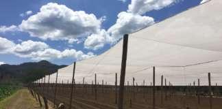 Le reti della linea Robuxta di Arrigoni offrono soluzioni sostenibili ai piccoli frutti, contro eventi atmosferici e insetti