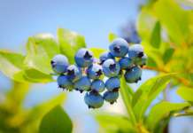 SanLucar produce 100 varietà di frutta e verdura proveniente da oltre 35 Paesi