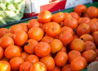 Le clementine sostenibili e made in Italy puntano a dare maggiore competitività al settore, contro la concorrenza spagnola