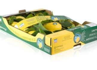Il Limone di Rocca Imperiale Igp, che cresce nel borgo calabrese, si caratterizza per il profumo e la quasi assenza di semi