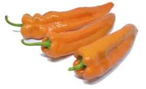 Amai Top seeds varietà