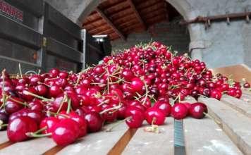 ciliegie mercato italia