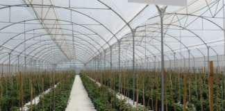 Le reti e schermi Arrigoni proteggono le Solanacee, come pomodori e peperoni, da insetti, e agenti atmosferici come pioggia, vento e grandine