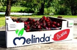 Le ciliegie Melinda sono proposte nel canale gdo e vanno anche all'estero