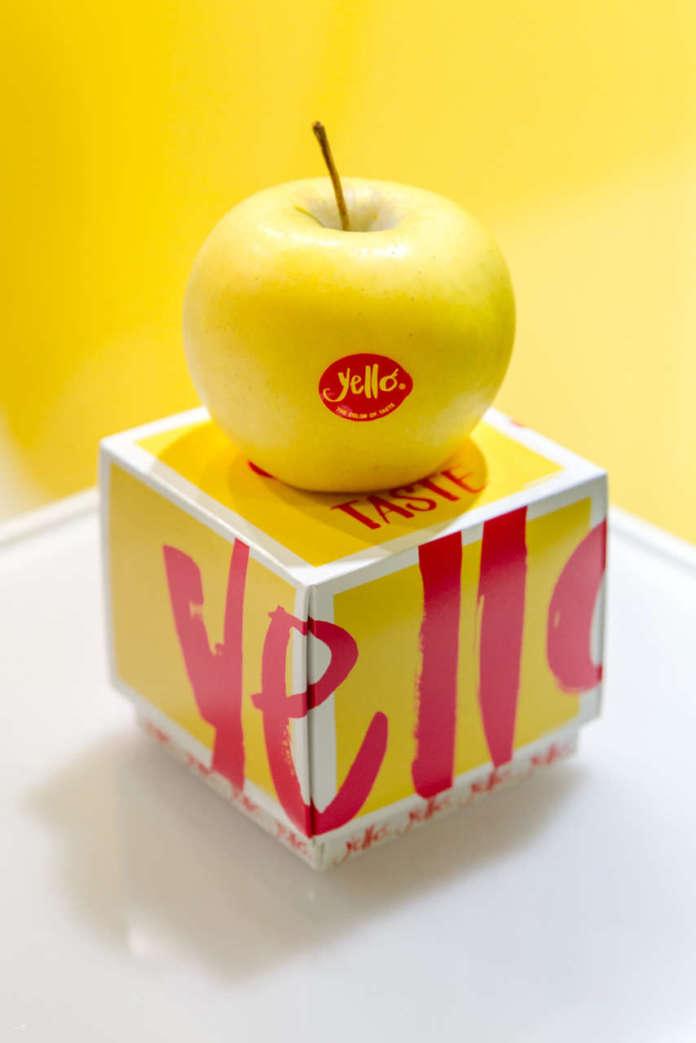 Yello è la mela club, di varietà Shinano Gold, commercializzata in esclusiva dai Consorzi VOG e VI.P. Per la prossima raccolta è previsto un aumento della produzione