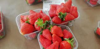 FragolAurea, cultivar sviluppata da Geoplant Vivai, sta avendo ottimi andamenti nel segmento retail grazie anche ai notevoli livelli produttivi