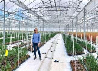 Hazera è azienda leader nel settore delle sementi e svolge molte ricerche sulle zone climatiche. I Paesi Bassi sono uno dei maggiori esportatori di cipolle al mondo