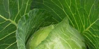 Seno Seed, azienda sementiera del Polesine. è specializzata nella produzione e commercializzazione di brassiche