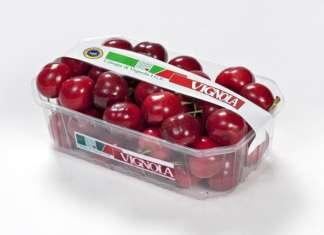 Le rinomate ciliegie di Vignola Igp, caratterizzate da una polpa consistente e croccante e gusto dolce. Sono al centro di eventi e campagne promozionali nel mese di giugno