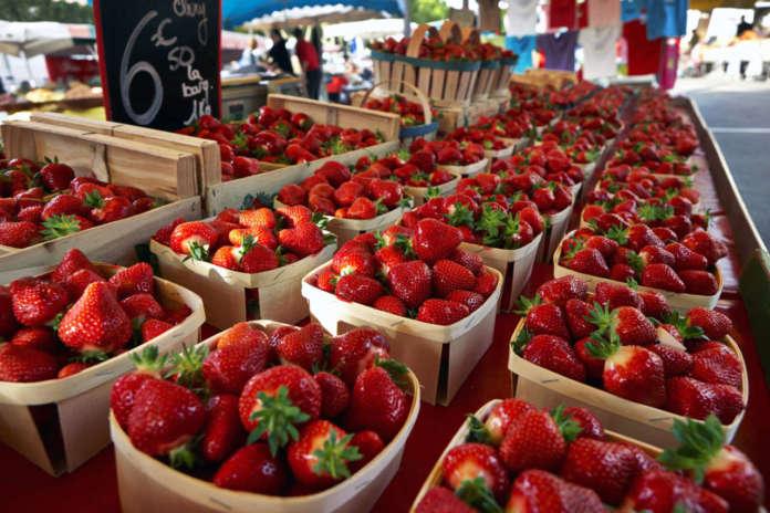 Analisi campagna fragole italia spagna import export