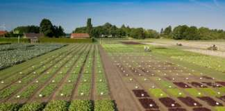 Nei campi dimostrativi di Fijnaart, in Olanda, Rijk Zwaan coltiva 700 innovative varietà