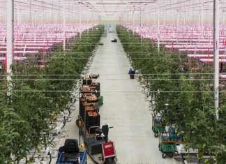 El Green House, a Ostellato, è l'unica serra idroponica in vetro d'Italia e tra le più grandi. Funziona con luci led e naturali