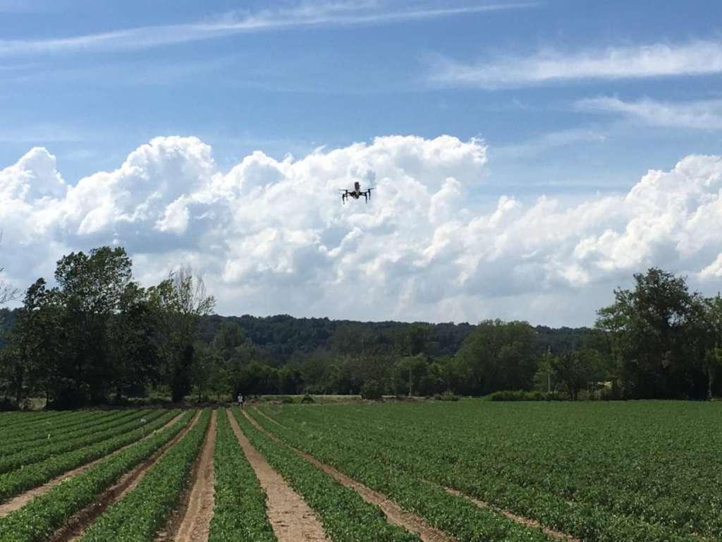 Droni utilizzati in campo. L'agricoltura di precisione è sempre più necessaria per rispondere ai cambiamenti climatici e agli attacchi di patogeni