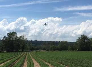 Il Consorzio Casalasco del Pomodoro mira a sostituire la lotta convenzionale con una difesa biologica, a tutela della biodiversità