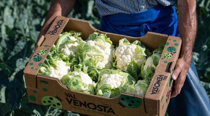 Il cavolfiore di montagna della Val Venosta è bianco candido, croccante, con gusto più delicato
